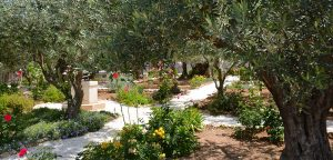 Garden of Gethsemane, Israel Bible Tours photo