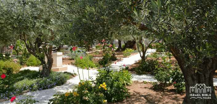 Garden of Gethsemane, Israel Bible Tours photo