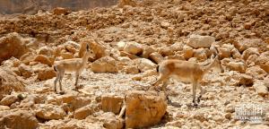 Judean Desert, Israel Bible Tours photo